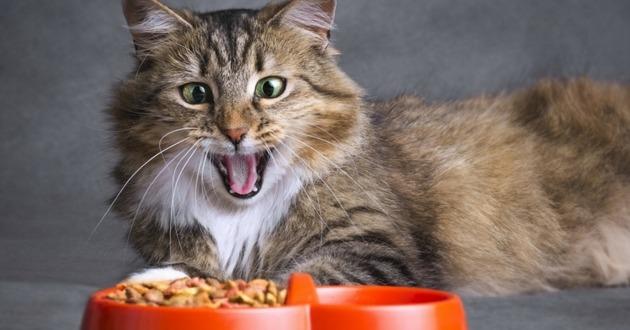 famille santé nourriture chat