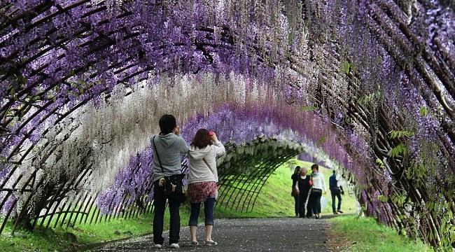 Kawachi au Japon