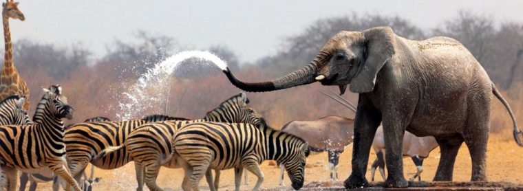 Safari sur les traces des Big Five