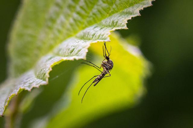 se protéger des moustiques en voyage